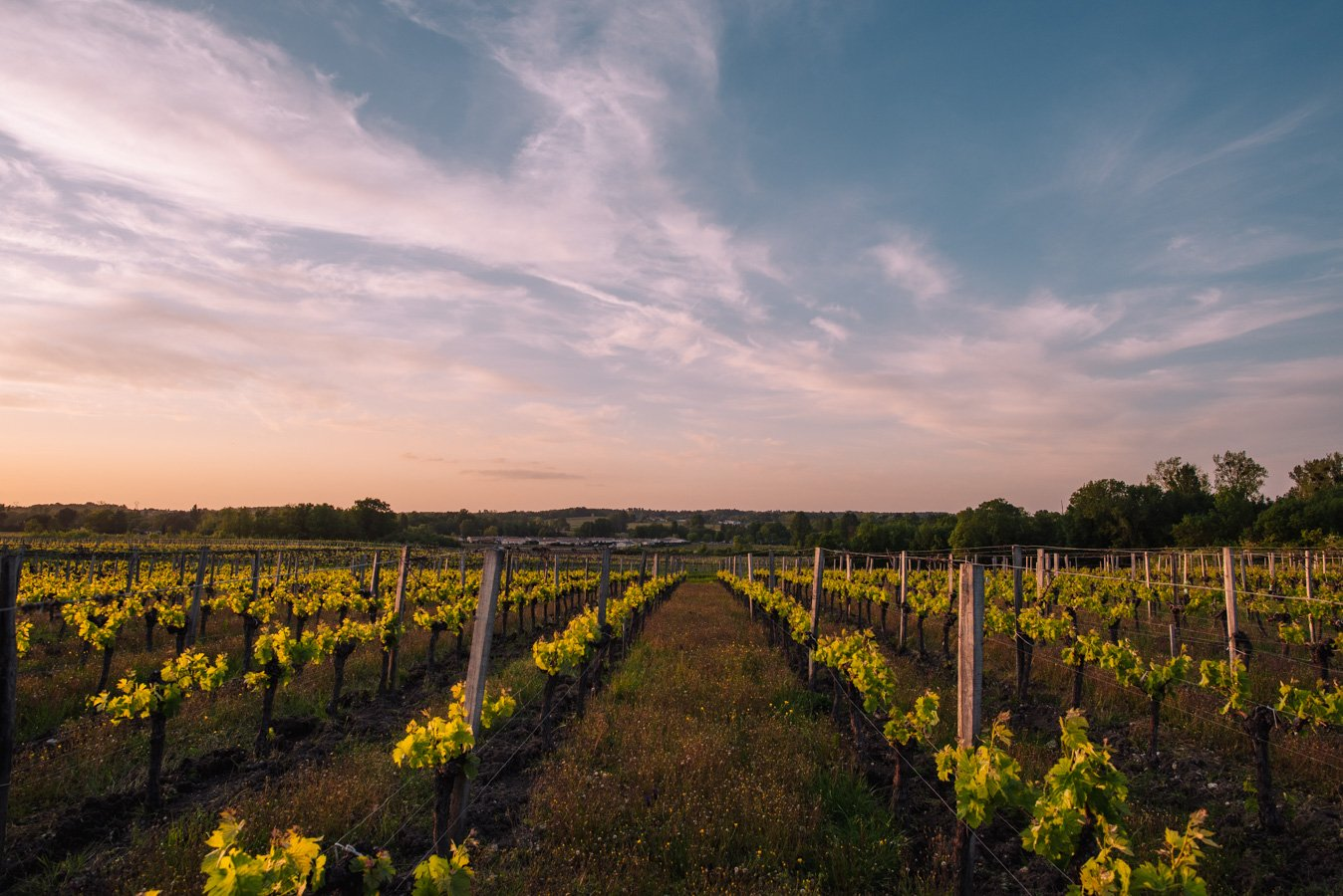 Exploring the bordeaux wine region during spring