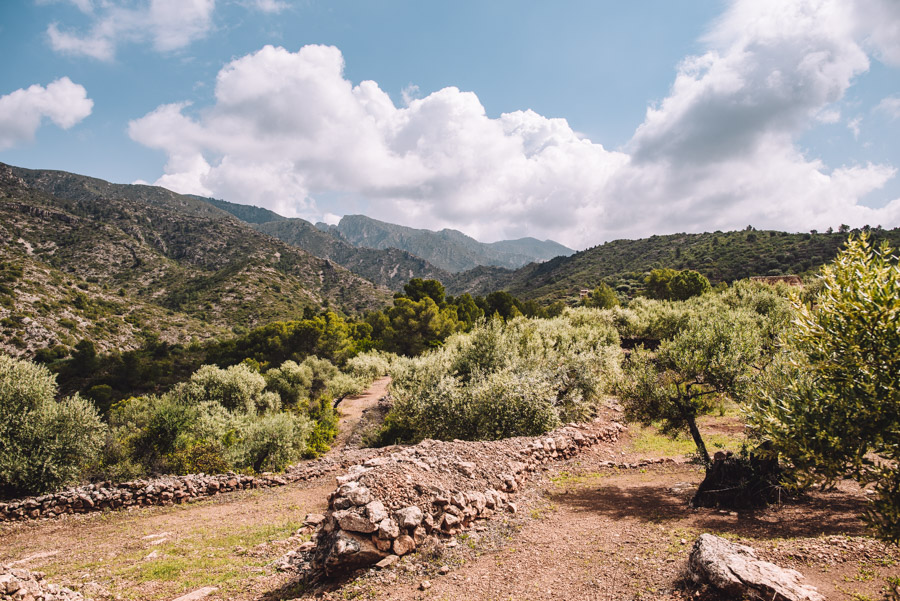Holiday in Spain on an Olive Farm