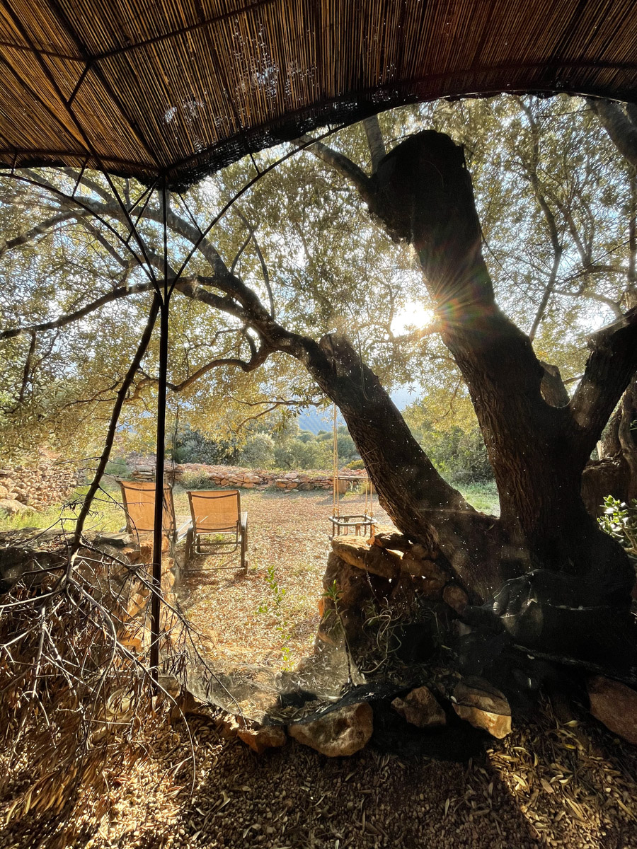 Staying in a cave house on an olive farm